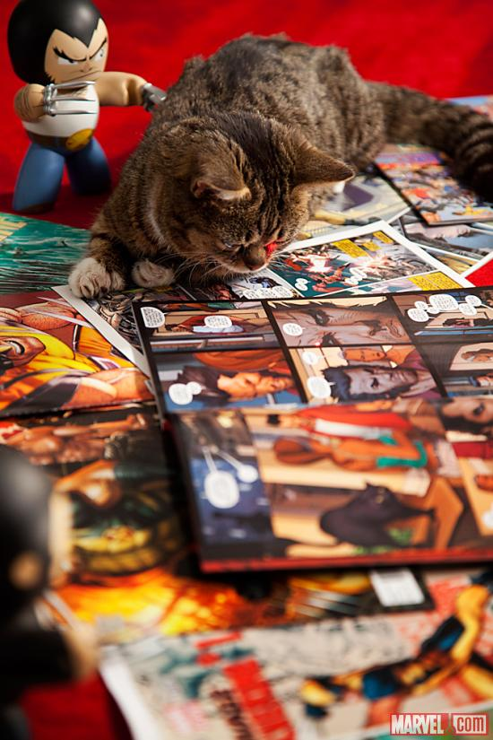 Lil Bub and Wolverine at Marvel HQ