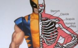 Marvel AR: Dr. A on Wolverine's Condition